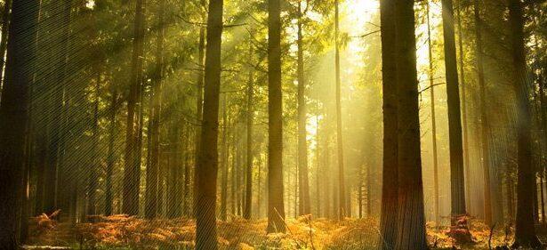 rundholzeinkauf